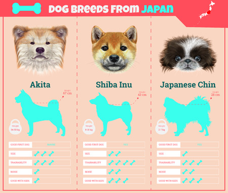 Dogs breed vector infographics types of dog breeds from Japan. Breed Set - Akita Inu, Shiba Inu, Japanese Chin