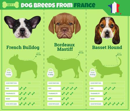 Perros raza vector de infografía tipos de razas de perros procedentes de Francia. Breed Set 1 - Bulldog francés, Burdeos Mastín, Basset