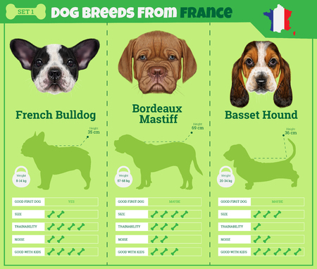 Dogs breed vector infographics types of dog breeds from France. Breed Set 1 - French Bulldog, Bordeaux Mastiff, Basset Hound