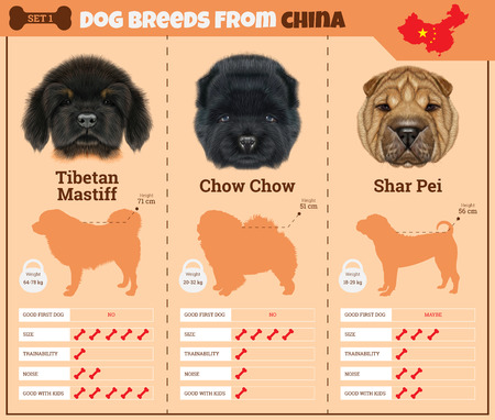 tibetan: Dogs breed vector infographics types of dog breeds from China. Breed Set 1 - Tibetan Mastiff, Chow Chow, Shar Pei