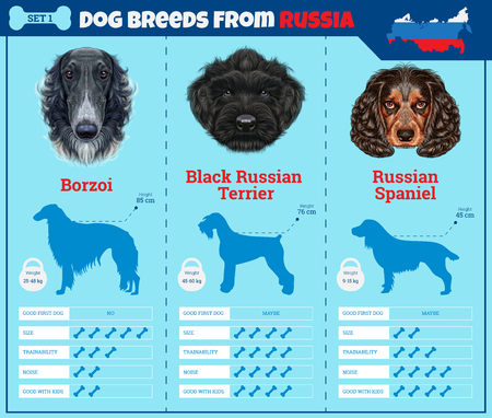 Dogs breed vector infographics types of dog breeds from Russia. Breed Set 1 - Borzoi, Black Russian Terrier, Russian Spaniel