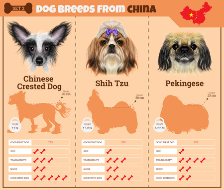 pekingese: Dogs breed vector infographics types of dog breeds from China. Breed Set 2 - Chinese Crested Dog, Shih Tzu, Pekingese Illustration