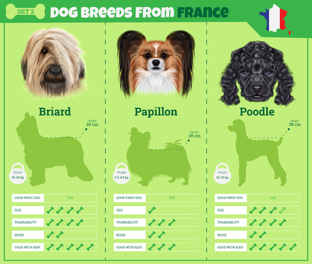 resentation: Dogs breed vector infographics types of dog breeds from France. Breed Set 2- Briard, Papillon dog, Poodle Illustration