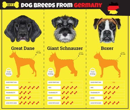 breed: Dogs breed vector infographics types of dog breeds from Germany. Breed Set 2 - Great Dane, Schnauzer, Boxer Illustration