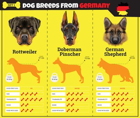 pinscher: Dogs breed vector infographics types of dog breeds from Germany. Breed Set 1- Rottweiler, Doberman Pinscher, German Shepherd