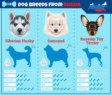 Perros raza vector de infografía tipos de razas de perros procedentes de Rusia. Breed Grupo 2 - Husky siberiano, samoyedo, Russian Toy Terrier