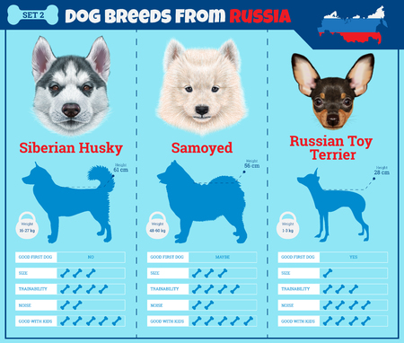 Dogs breed vector infographics types of dog breeds from Russia. Breed Set 2 - Siberian Husky, Samoyed, Russian Toy Terrier