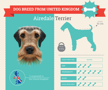 Airedale Terrier Dog breed vector infographics. This dog breed from United Kingdom