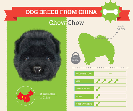 chow: Chow Chow Dog breed vector infographics. This dog breed from China Illustration