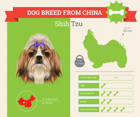 shih tzu: Shih Tzu Dog breed vector infographics. This dog breed from China