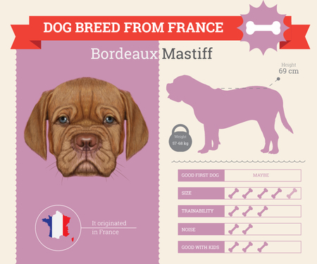 breed: Bordeaux Mastiff Dog breed vector infographics. This dog breed from France