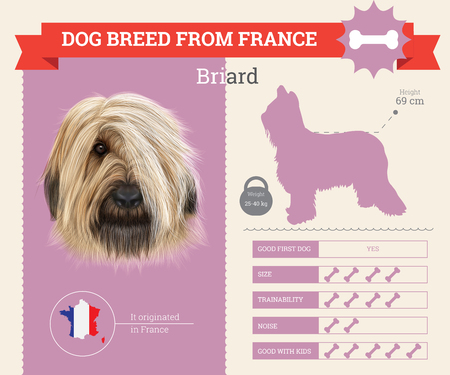 Briard Dog breed vector infographics. This dog breed from France Illustration