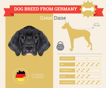 dane: Great Dane Dog breed vector infographics. This dog breed from Germany