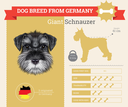 schnauzer: Schnauzer Dog breed vector infographics. This dog breed from Germany Illustration