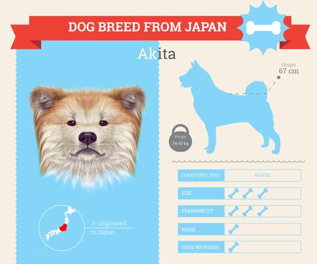 akita: Akita Inu Dog breed vector infographics. This dog breed from Japan