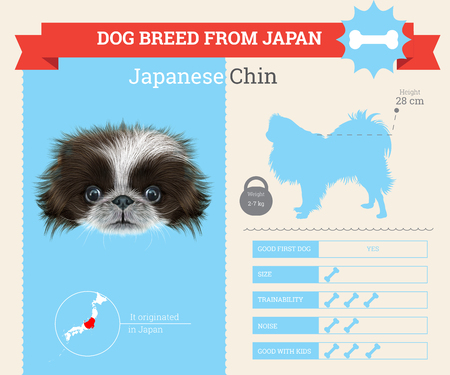 CHIN: Japanese Chin Dog breed vector infographics. This dog breed from Japan
