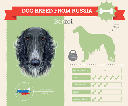 borzoi: Borzoi Dog breed vector infographics. This dog breed from Russia