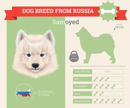 siberian samoyed: Samoyed Dog breed vector infographics. This dog breed from Russia Illustration