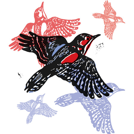 ornithological: Vector woodpeckers in abstract composition. Linocut woodpeckers in flight in different colors on white background Illustration