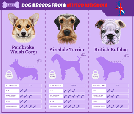 Dogs breed vector infographics types of dog breeds from United Kingdom. Breed Set 1 - Pembroke Welsh Corgi, Airedale Terrier, Bulldog.