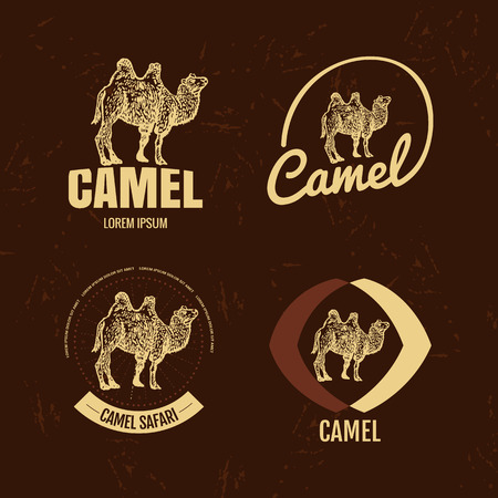 humps: Vector black and white set with desert camel. Illustration