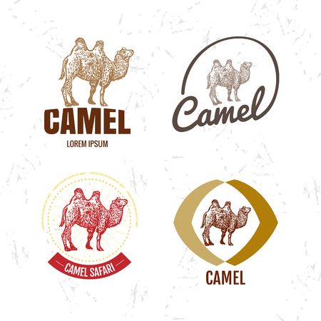 humps: Vector colorful set with desert camel. Illustration