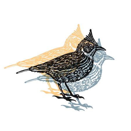 Crested lark bird sign. Desert bird. Vector engraved Illustration. Linocut Crested lark Isolated on white background