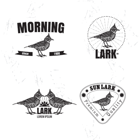 Vector black and white set with desert Crested lark bird. The lark bird as main element of logotypes on white background. Engraves vector design graphic element, emblem, logo, sign, identity, logotype