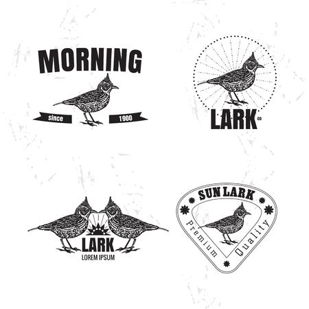 Vector black and white set with desert Crested lark bird. The lark bird as main element of logotypes on white background. Engraves vector design graphic element, emblem, logo, sign, identity, logotype