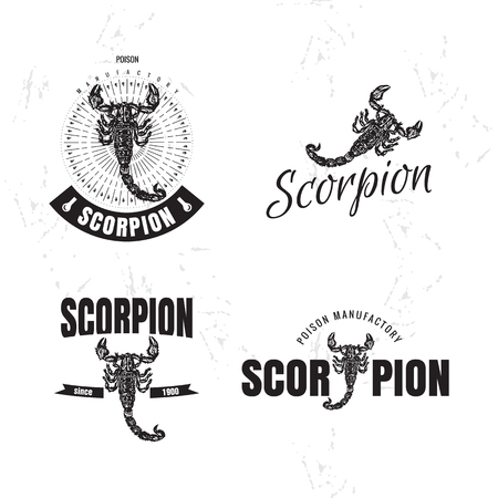 predatory insect: Vector black and white set with scorpion. The scorpion as main element
