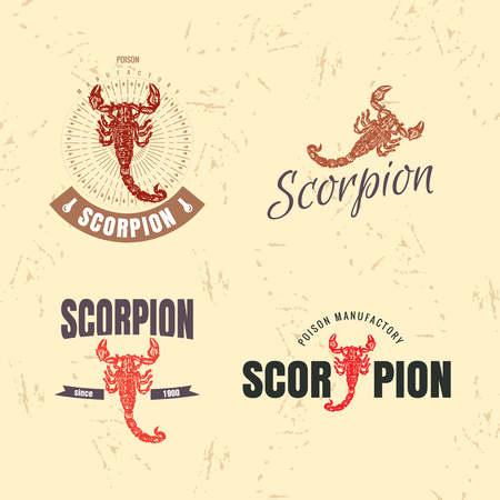 predatory insect: Vector colorful set with scorpion. The scorpion as main element