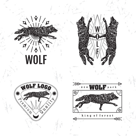 howl: Vector black and white set with forest wolf. The wolf as main element Illustration