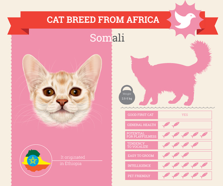 Somali Cat breed vector infographics. This cat breed from Africa Illustration
