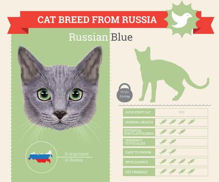 Russische blaue Katze Rasse Vektor Infografiken. Diese Katzenrasse aus Russland