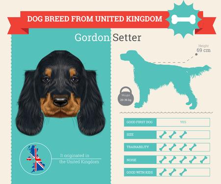Gordon Setter dog breed vector infographics. This dog breed from United Kingdom Illustration