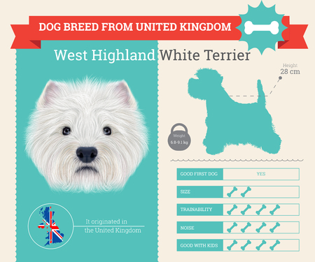highland: West Highland White Terrier dog breed vector infographics. This dog breed from United Kingdom Illustration