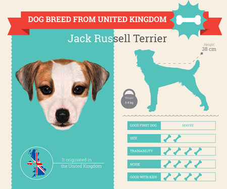 jack russell: Jack Russell Terrier dog breed vector infographics. This dog breed from United Kingdom