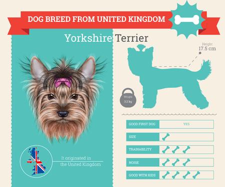 Yorkshire-Terrier-Hundezucht Vektor Infografiken. Diese Hunderasse aus Großbritannien