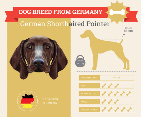 pointer dog: German Shorthaired Pointer dog breed vector infographics. This dog breed from German Illustration