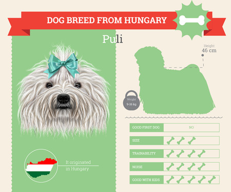 corded: Puli dog breed vector infographics. This dog breed from Hungary