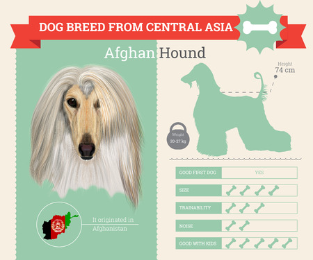 afghan: Afghan Hound dog breed vector infographics. This dog breed from Central Asia