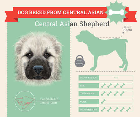 central asia shepherd dog: Central Asian Shepherd Dog breed vector infographics. This dog breed from Central Asia