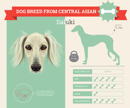 Saluki dog breed vector infographics. This dog breed from Central Asia