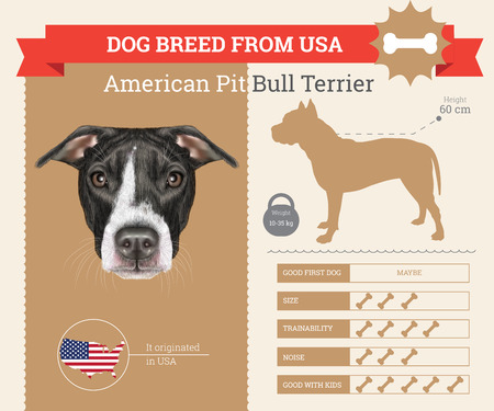 pit: American Pit Bull Terrier dog breed vector infographics. This dog breed from USA