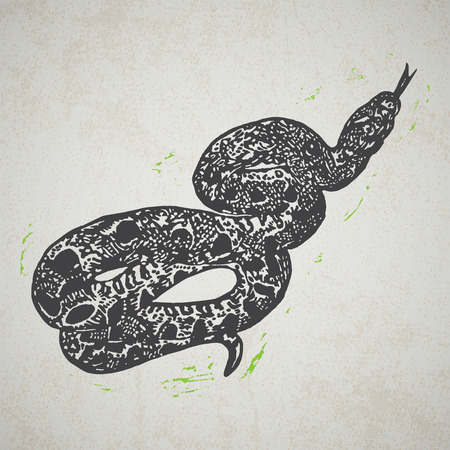 Linocut tropical Boa Constrictor snake on background. Vector Illustrated Boa Constrictor snake.