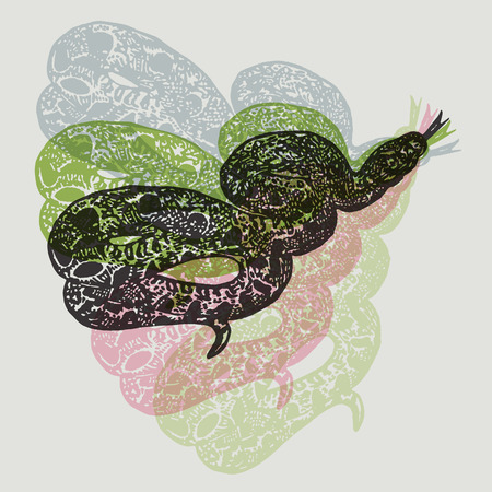 anaconda: Linocut tropical Boa Constrictor snake on background. Vector Illustrated Boa Constrictor snake.