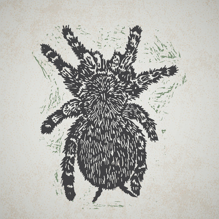 tarantula: Linocut Tarantula on background. Vector Illustrated frame from Tarantula spiders. Illustration