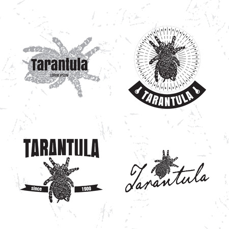 tarantula: Vector  set with Tarantula spider. Illustration