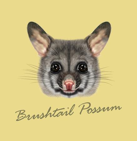 possum: Vector Illustrated portrait of Common brushtail possum