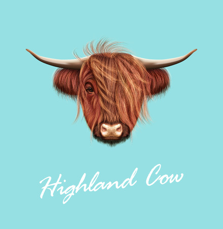 Vector Illustrated portrait of Highland cattle 向量圖像